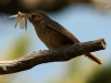 birds-022